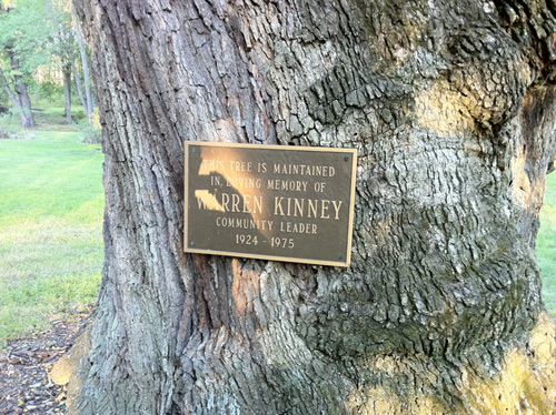 Warren Kinney Tree, New Vernon, New Jersey